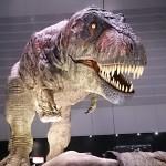 ☆恐竜博☆